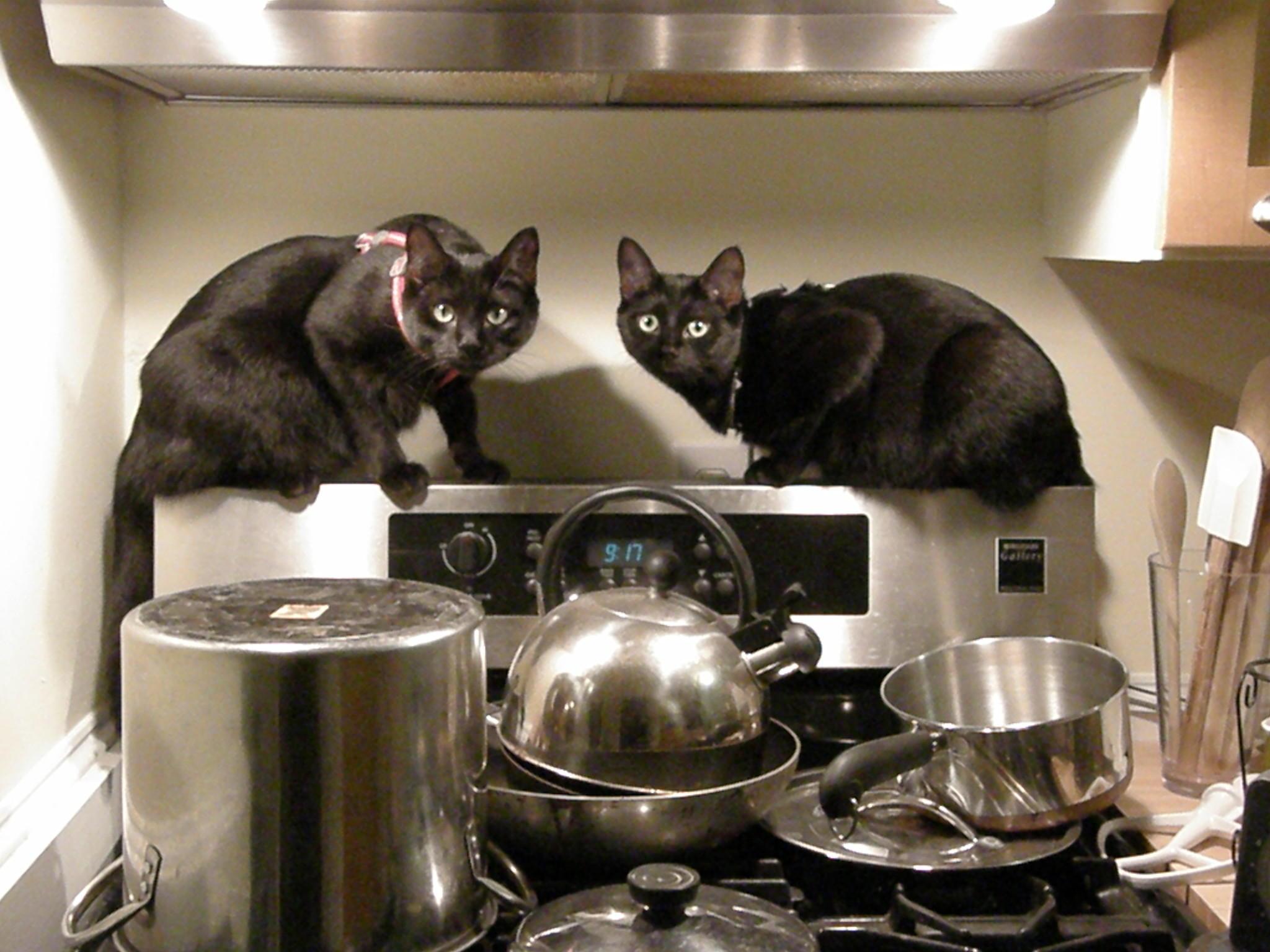 你家的宠物在厨房里燃气灶具使用情况下安全么?